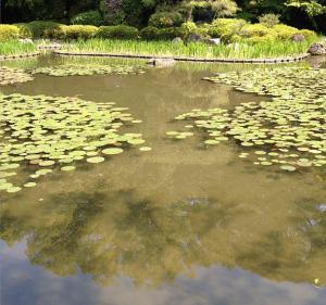 Zen Scene